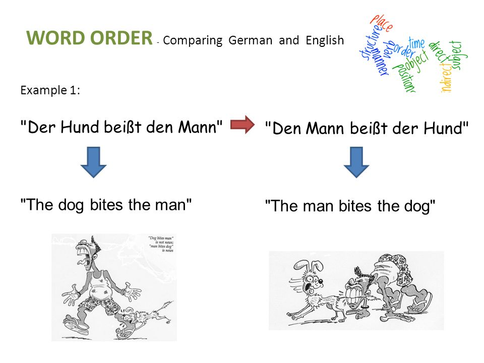 WORD ORDER - Comparing German and English Example 1: Der Hund beißt den Mann The dog bites the man Den Mann beißt der Hund The man bites the dog