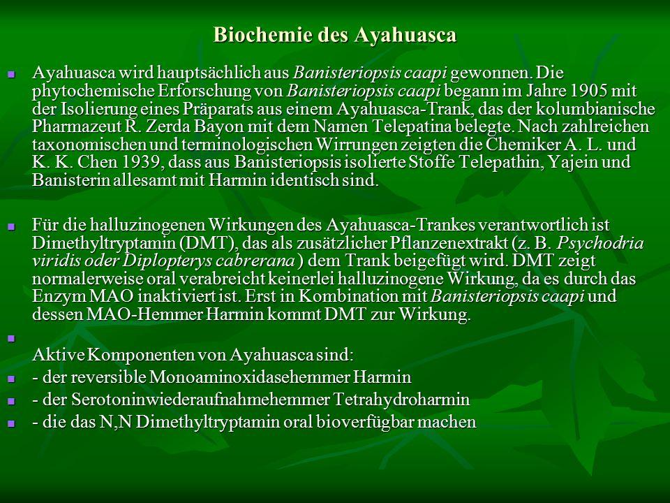 Biochemie des Ayahuasca Ayahuasca wird hauptsächlich aus Banisteriopsis caapi gewonnen.