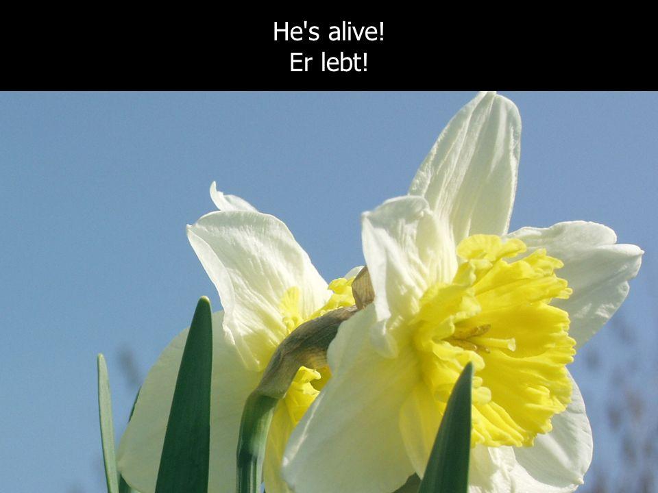 Jesus is alive! Jesus lebt! He's alive! Er lebt!