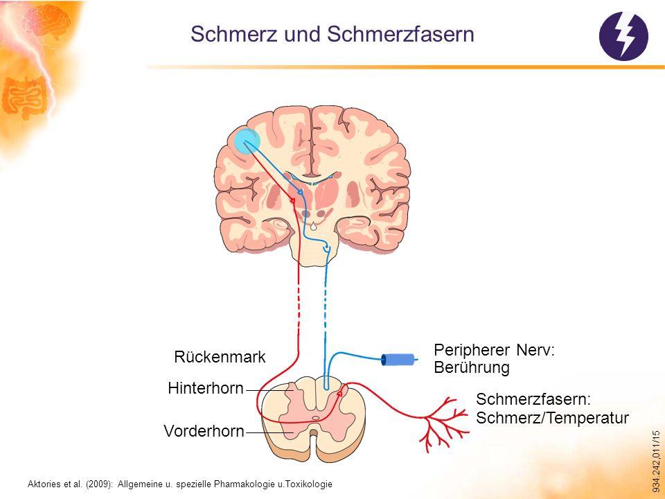 934.242,011/15 Aktivierung von Schmerzfasern Blutgefäß Verletzung ATP Bradykinin 5-HT (Serotonin) H+H+ Prostaglandin Histamin Substanz P CGRP Substanz P Anterolateral System Dorsale Wurzel Spinalganglion Zellkörper Mastzellen oder Neutrophile Mod.