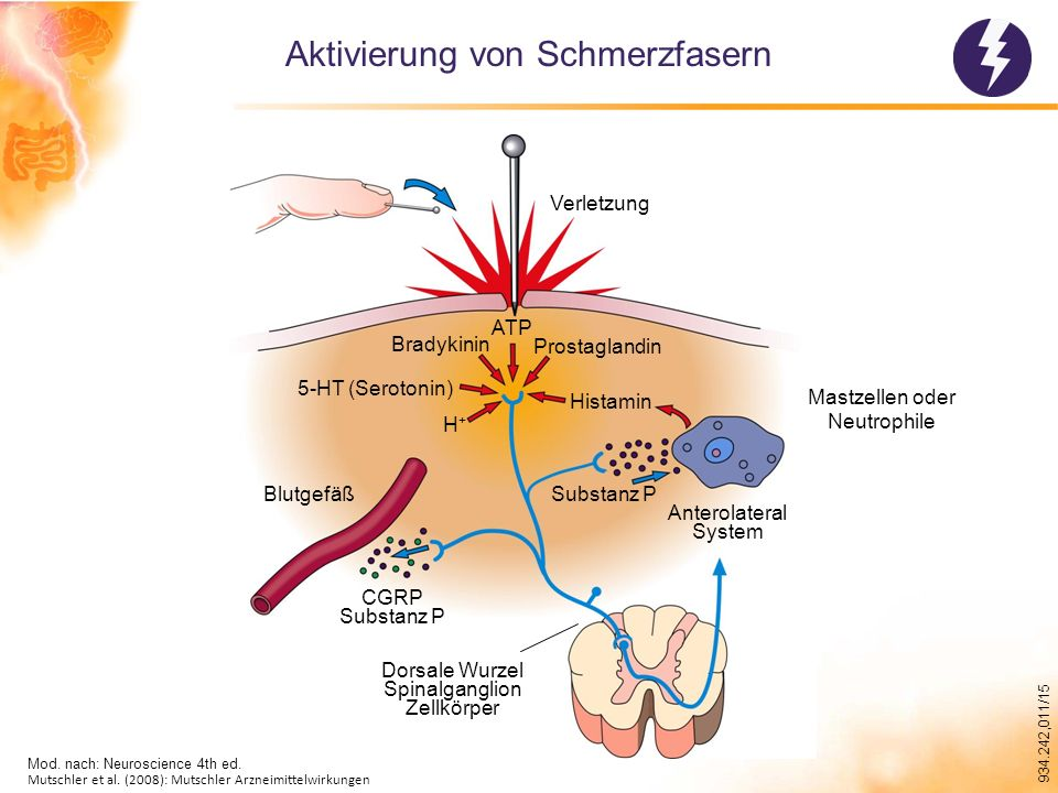 934.242,011/15 Schmerzen – Dimensionen Multidimensionales Schmerzmodell von Loeser (2006)
