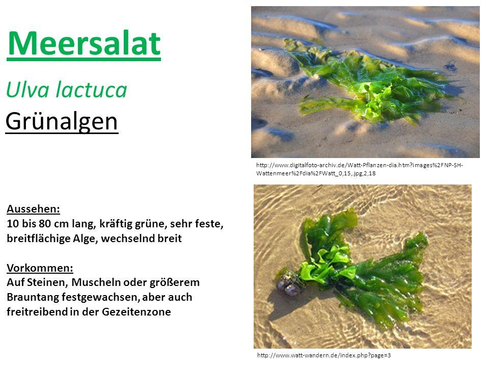 http://www.watt-wandern.de/index.php?page=3 http://www.digitalfoto-archiv.de/Watt-Pflanzen-dia.htm?images%2FNP-SH- Wattenmeer%2Fdia%2FWatt_0,15,.jpg,2