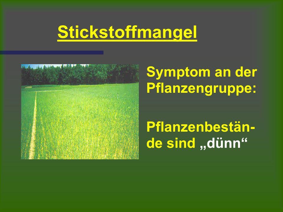 """Stickstoffmangel Symptom an der Pflanzengruppe: Pflanzenbestän- de sind """"dünn"""