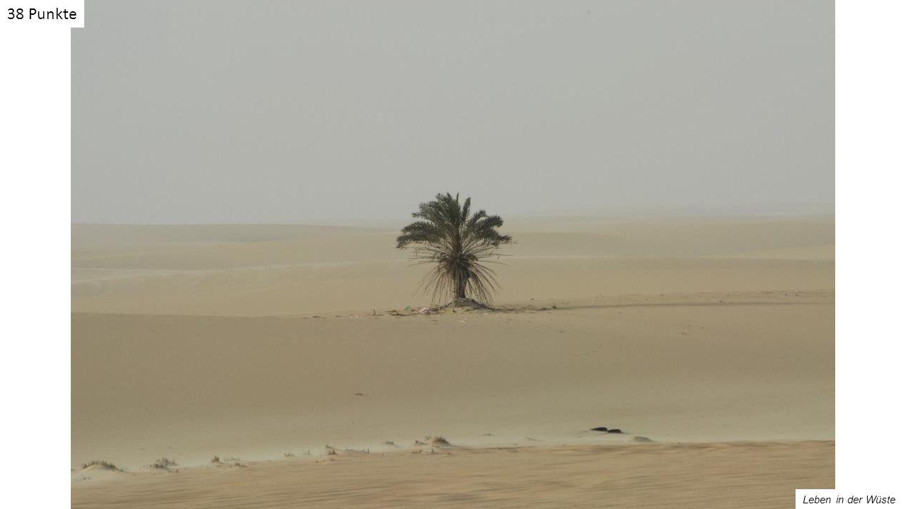 Leben in der Wüste 38 Punkte