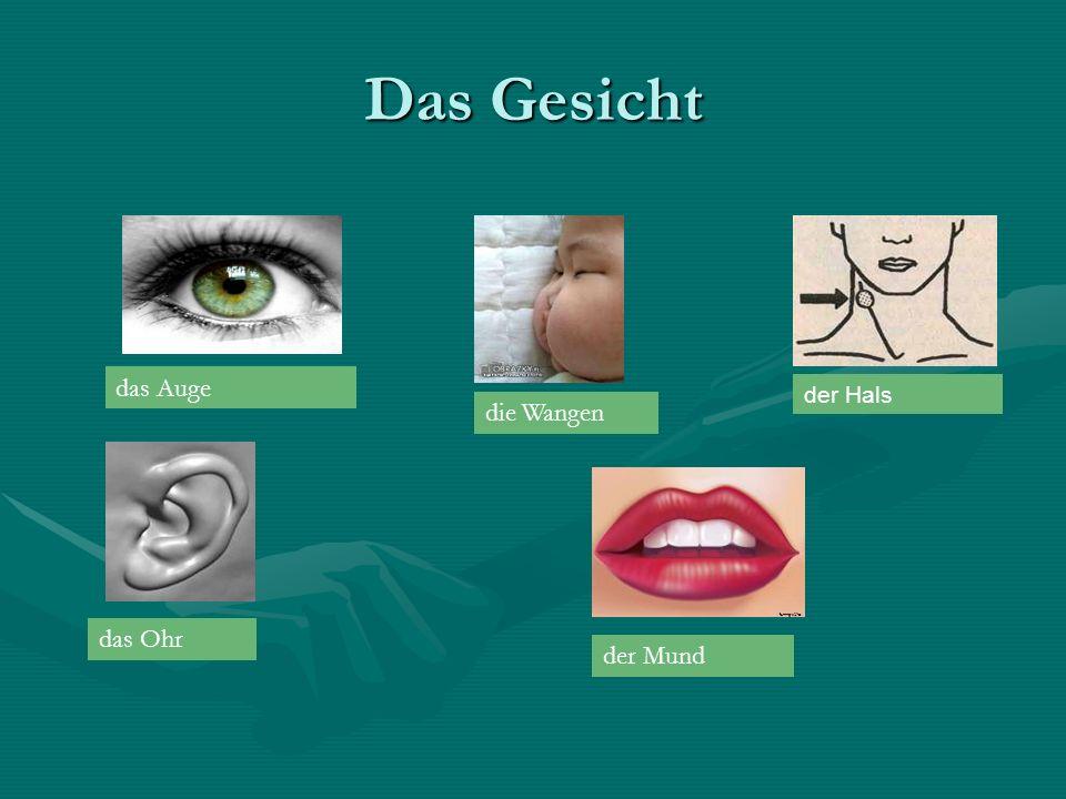 Das Gesicht das Auge das Ohr die Wangen der Hals der Mund
