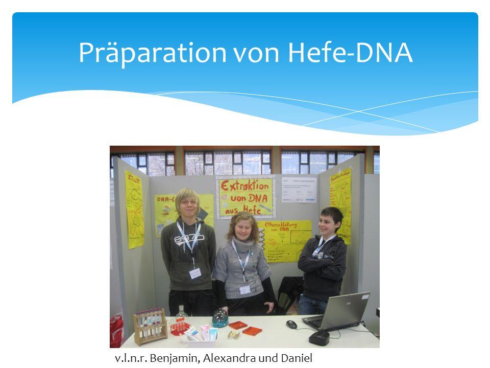 Präparation von Hefe-DNA v.l.n.r. Benjamin, Alexandra und Daniel