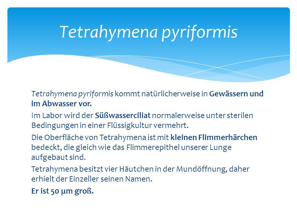 Tetrahymena pyriformis kommt natürlicherweise in Gewässern und im Abwasser vor.