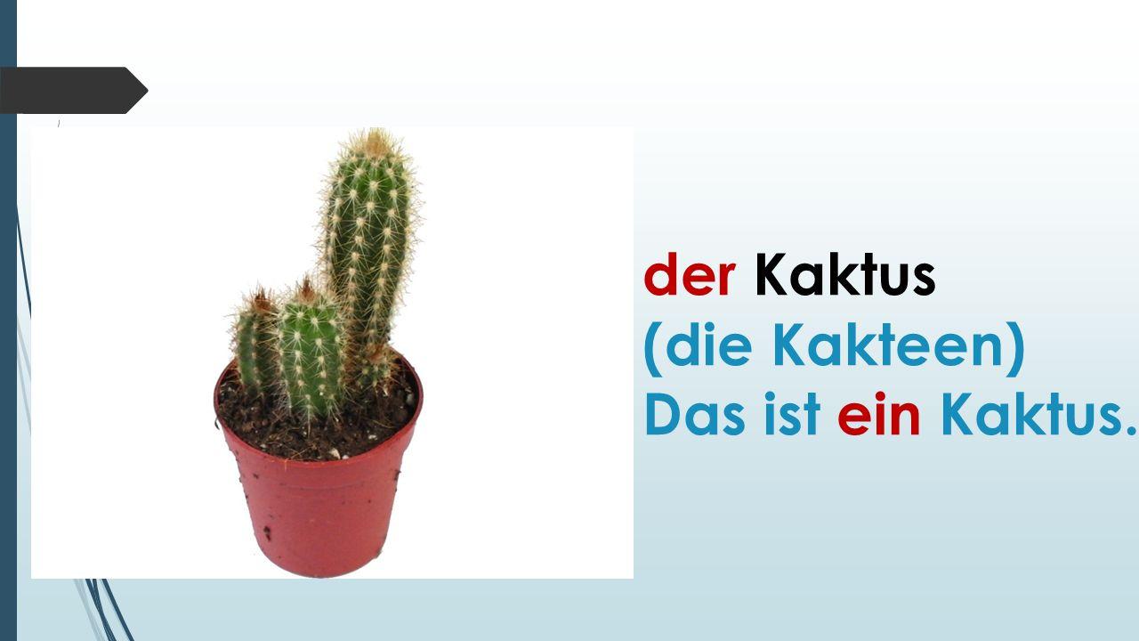 der Kaktus (die Kakteen) Das ist ein Kaktus.