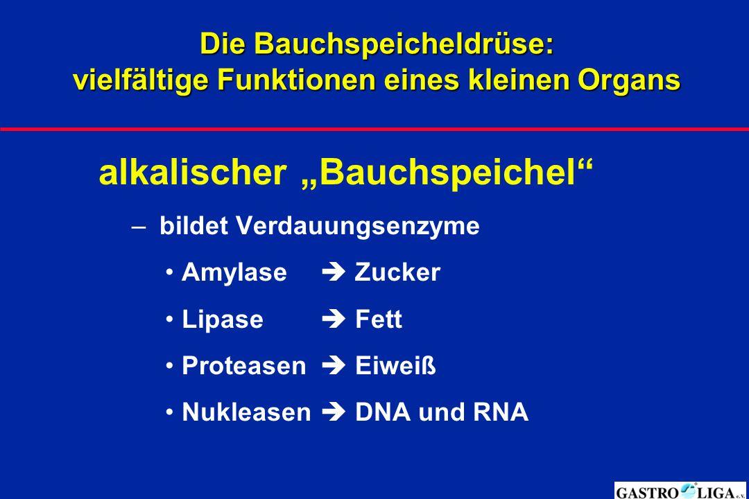 """Die Bauchspeicheldrüse: vielfältige Funktionen eines kleinen Organs alkalischer """"Bauchspeichel – bildet Verdauungsenzyme Amylase  Zucker Lipase  Fett Proteasen  Eiweiß Nukleasen  DNA und RNA"""