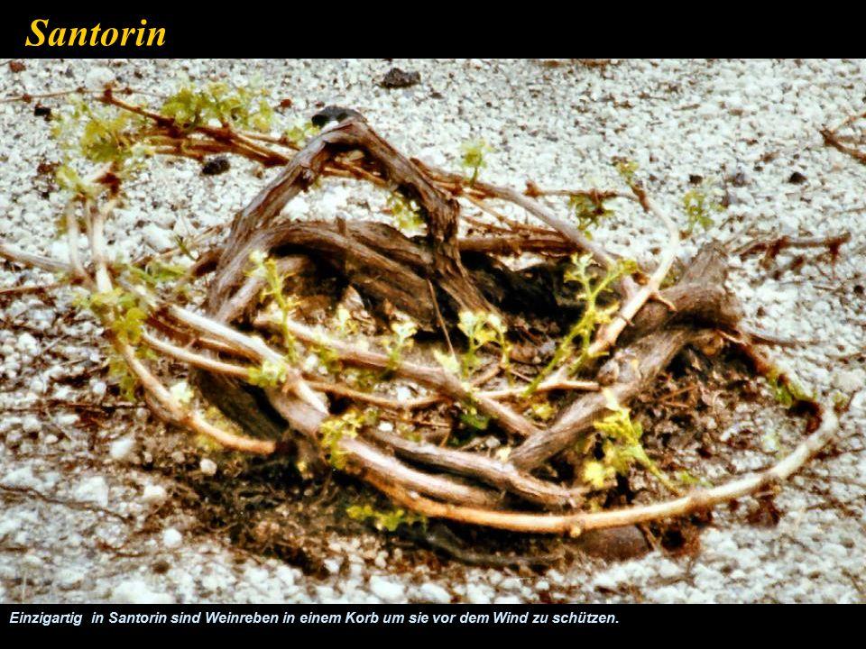 Beträchtliche Flächen werden landwirtschaftlich genutzt Santorin