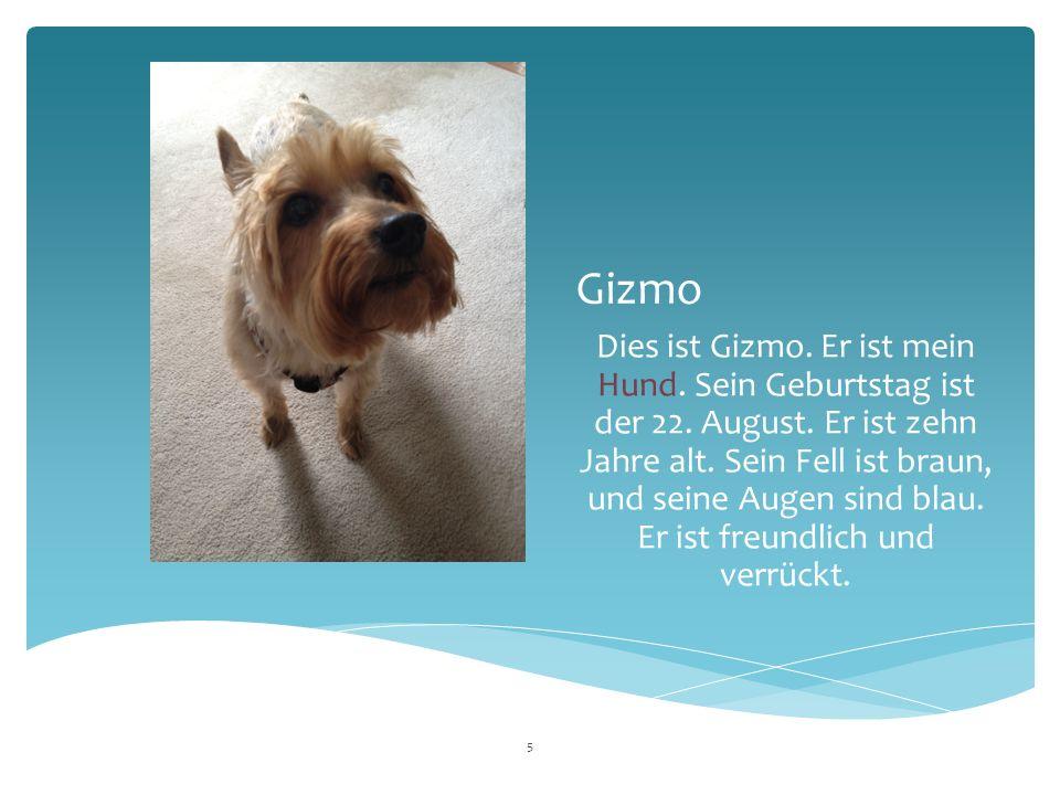 Gizmo Dies ist Gizmo. Er ist mein Hund. Sein Geburtstag ist der 22.