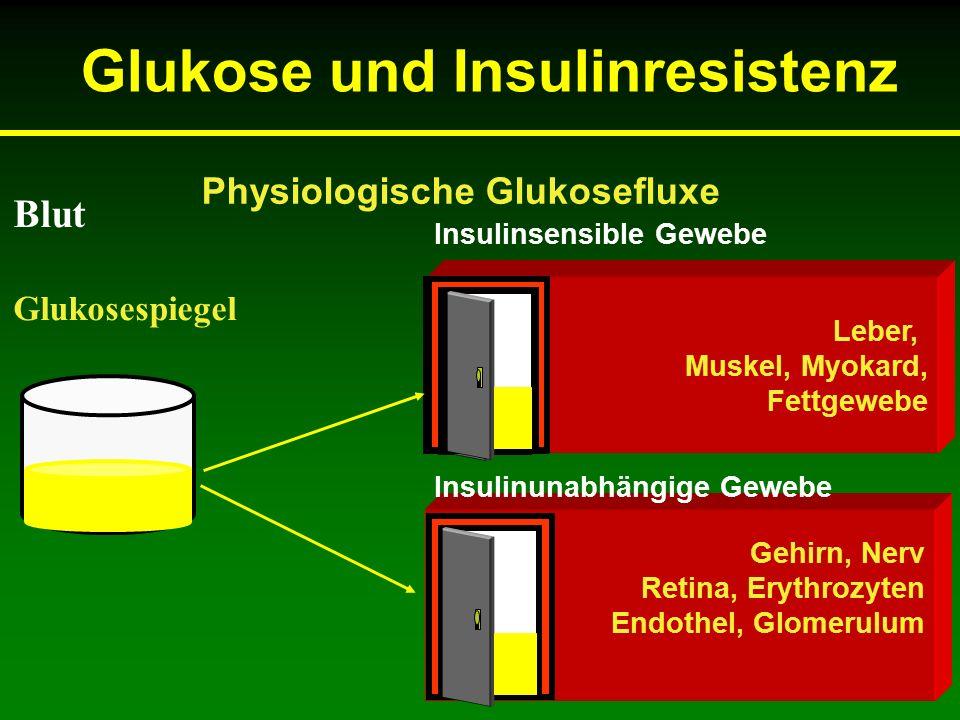 Gehirn, Nerv Retina, Erythrozyten Endothel, Glomerulum Blut Glukosespiegel Insulinsensible Gewebe Insulinunabhängige Gewebe Physiologische Glukosefluxe Leber, Muskel, Myokard, Fettgewebe Glukose und Insulinresistenz