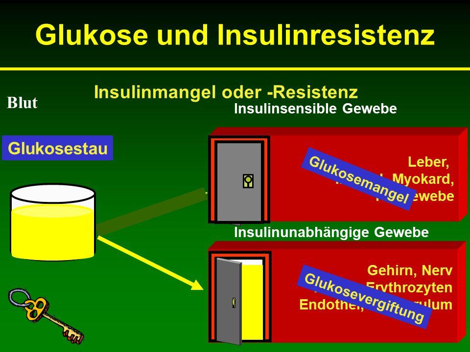 Gehirn, Nerv Retina, Erythrozyten Endothel, Glomerulum Insulinsensible Gewebe Insulinunabhängige Gewebe Leber, Muskel, Myokard, Fettgewebe Insulinmangel oder -Resistenz Blut Glukosespiegel Glukosemangel Glukosevergiftung Glukosestau Glukose und Insulinresistenz