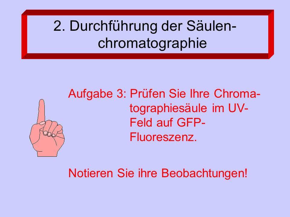 2. Durchführung der Säulen- chromatographie Aufgabe 3: Prüfen Sie Ihre Chroma- tographiesäule im UV- Feld auf GFP- Fluoreszenz. Notieren Sie ihre Beob