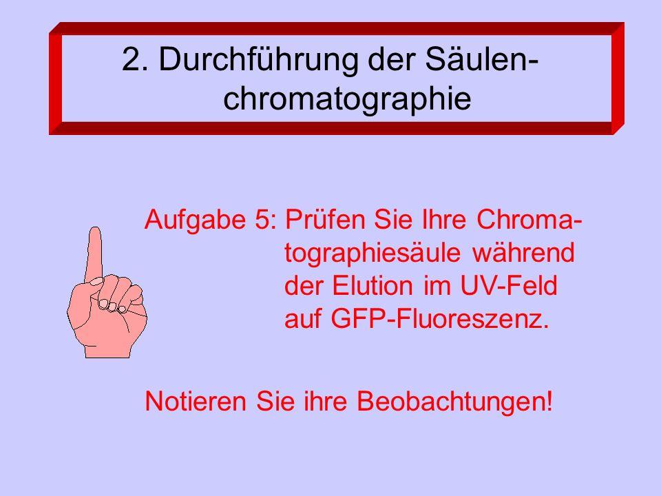 2. Durchführung der Säulen- chromatographie Aufgabe 5: Prüfen Sie Ihre Chroma- tographiesäule während der Elution im UV-Feld auf GFP-Fluoreszenz. Noti