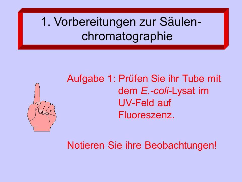 1. Vorbereitungen zur Säulen- chromatographie Aufgabe 1: Prüfen Sie ihr Tube mit dem E.-coli-Lysat im UV-Feld auf Fluoreszenz. Notieren Sie ihre Beoba