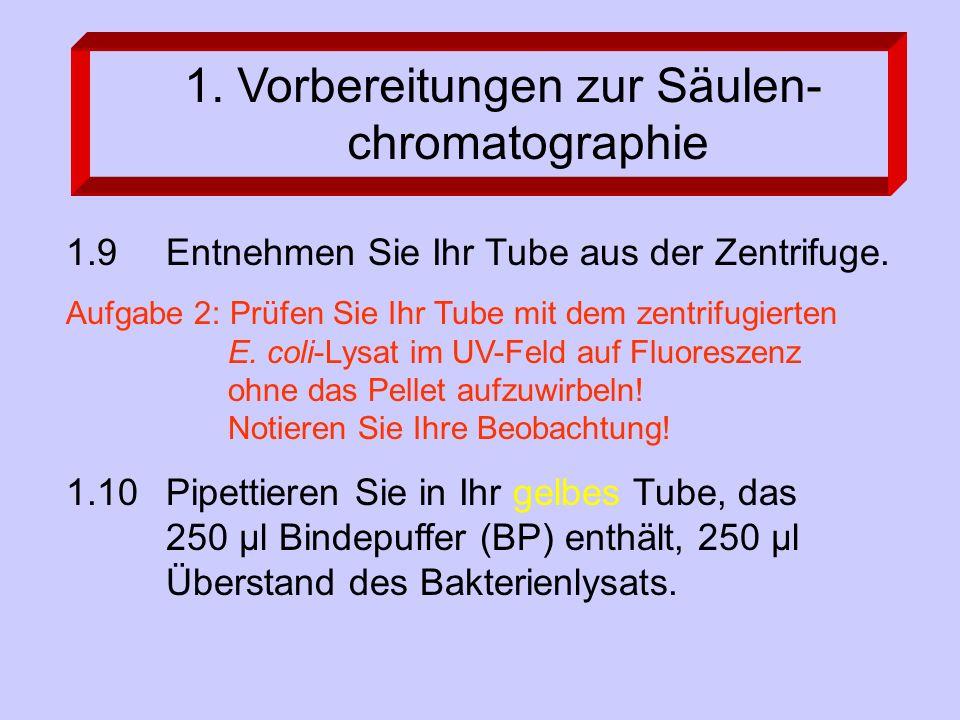 1.9 Entnehmen Sie Ihr Tube aus der Zentrifuge. Aufgabe 2: Prüfen Sie Ihr Tube mit dem zentrifugierten E. coli-Lysat im UV-Feld auf Fluoreszenz ohne da