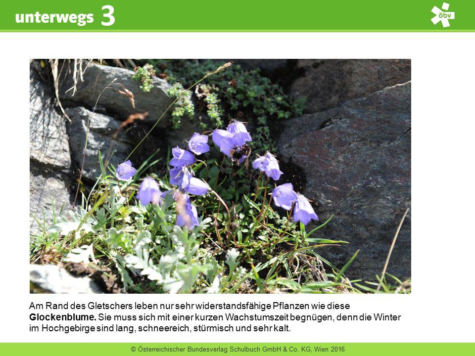 © Österreichischer Bundesverlag Schulbuch GmbH & Co. KG, Wien 2016 3 Am Rand des Gletschers leben nur sehr widerstandsfähige Pflanzen wie diese Glocke