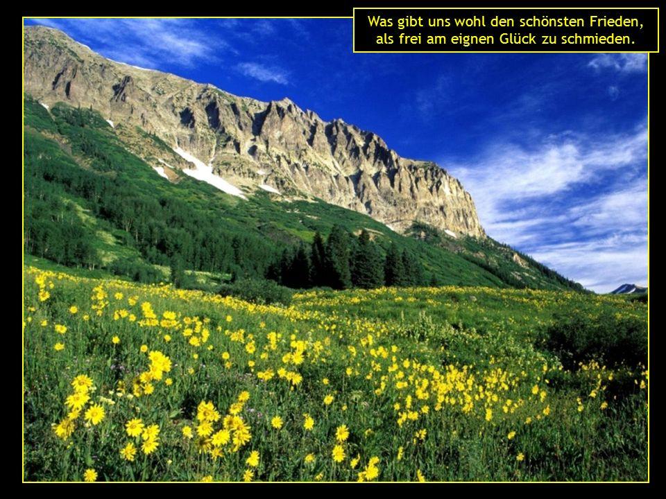 Das Leben ist ein dorniger Rosenstock und das Glück seine Blüten.