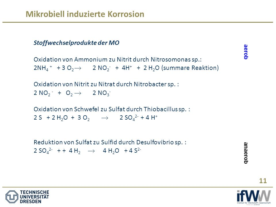 Mikrobiell induzierte Korrosion 11 Stoffwechselprodukte der MO Oxidation von Ammonium zu Nitrit durch Nitrosomonas sp.: 2NH 4 + + 3 O 2  2 NO 2 - + 4H + + 2 H 2 O (summare Reaktion) Oxidation von Nitrit zu Nitrat durch Nitrobacter sp.