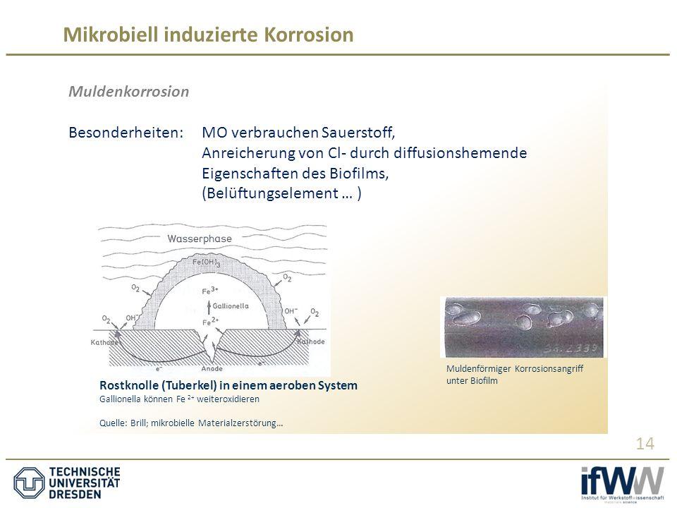 Mikrobiell induzierte Korrosion 14 Muldenkorrosion Besonderheiten: MO verbrauchen Sauerstoff, Anreicherung von Cl- durch diffusionshemende Eigenschaften des Biofilms, (Belüftungselement … ) Muldenförmiger Korrosionsangriff unter Biofilm Rostknolle (Tuberkel) in einem aeroben System Gallionella können Fe 2+ weiteroxidieren Quelle: Brill; mikrobielle Materialzerstörung…