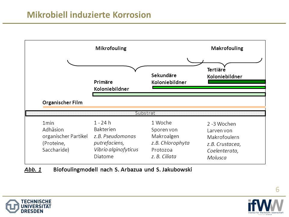 Mikrobiell induzierte Korrosion 6 Primäre Koloniebildner 1 - 24 h Bakterien z.B.