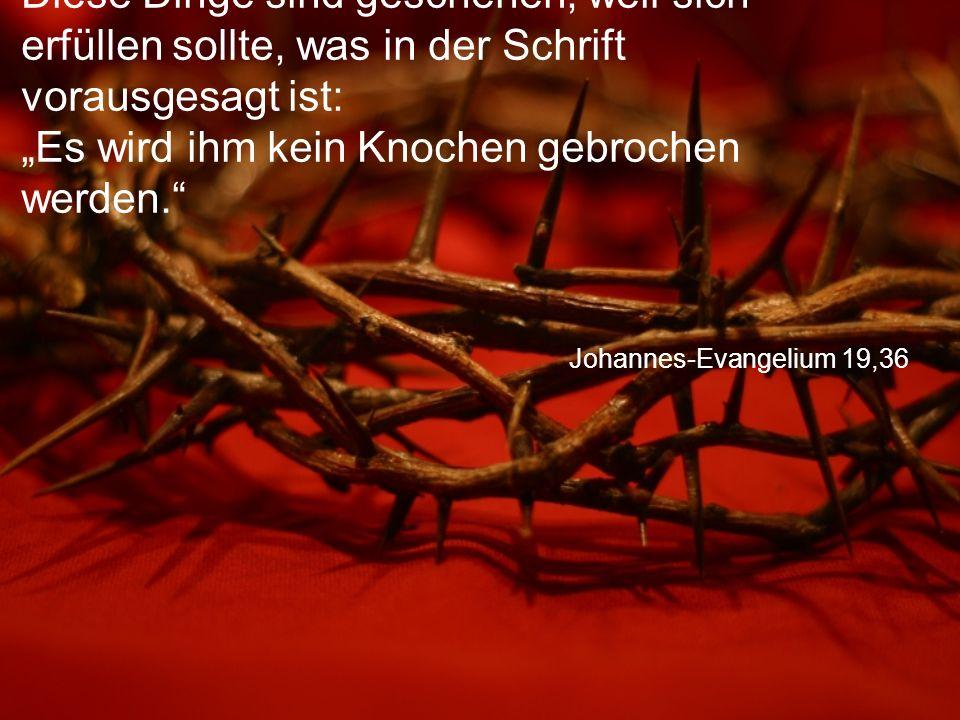 """Johannes-Evangelium 19,36 Diese Dinge sind geschehen, weil sich erfüllen sollte, was in der Schrift vorausgesagt ist: """"Es wird ihm kein Knochen gebrochen werden."""