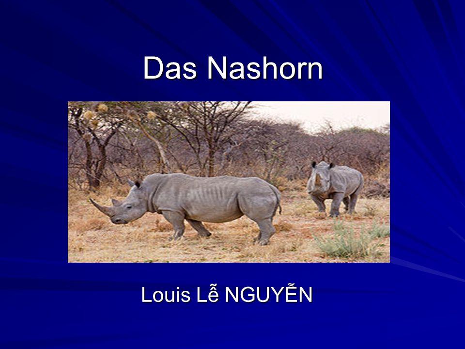 Text durch Klicken hinzufügen Das Nashorn Louis Lễ NGUYỄN
