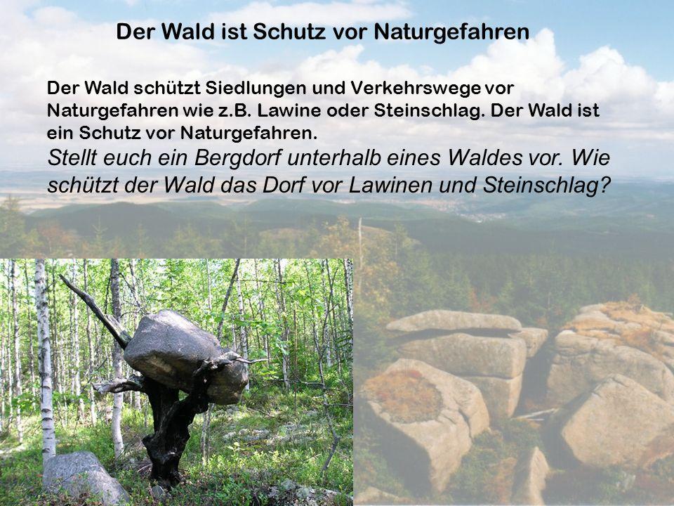 Der Wald ist Schutz vor Naturgefahren Der Wald schützt Siedlungen und Verkehrswege vor Naturgefahren wie z.B. Lawine oder Steinschlag. Der Wald ist ei
