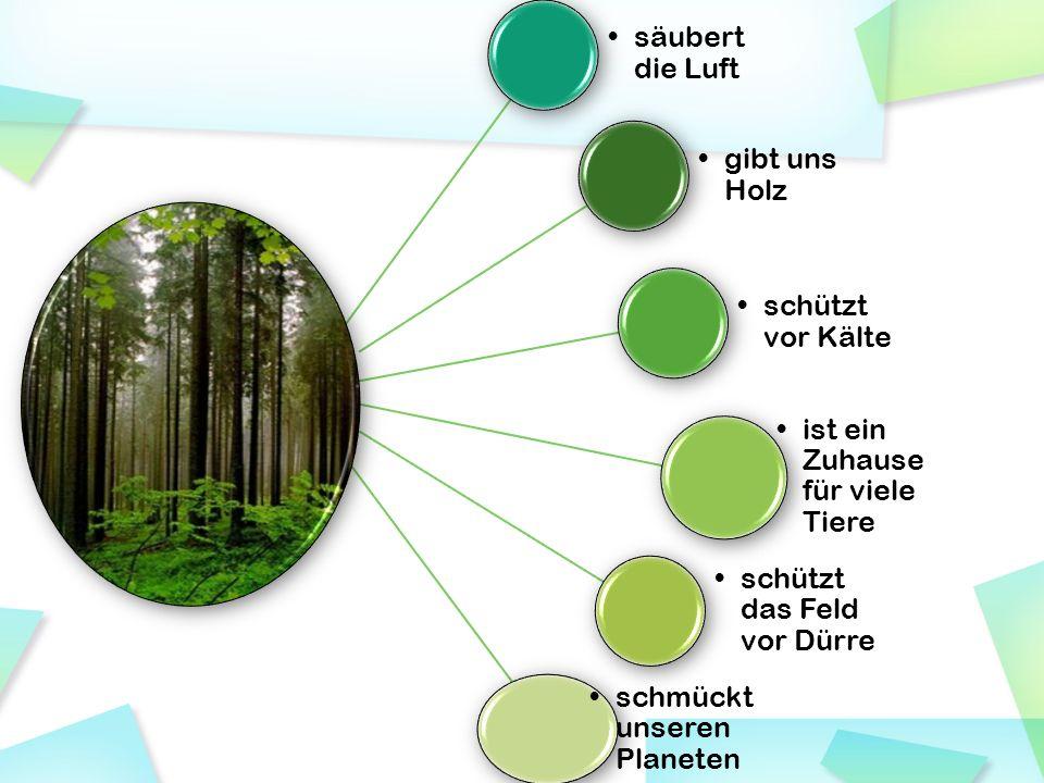 Der Wald ist Holzproduzent.Holz ist der bedeutendste Rohstoff.
