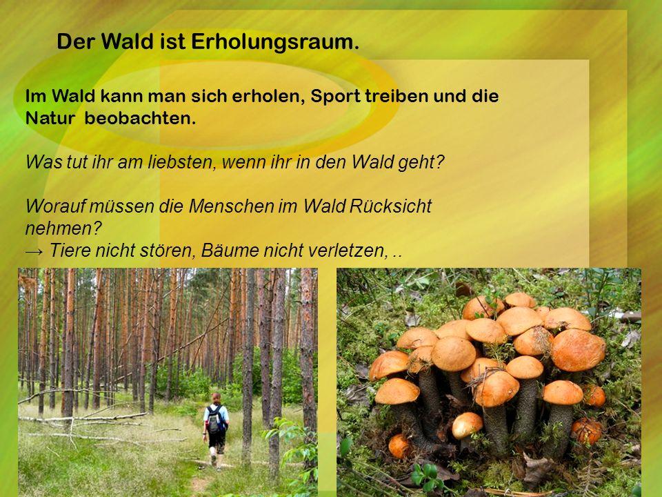 Der Wald ist Erholungsraum. Im Wald kann man sich erholen, Sport treiben und die Natur beobachten. Was tut ihr am liebsten, wenn ihr in den Wald geht?