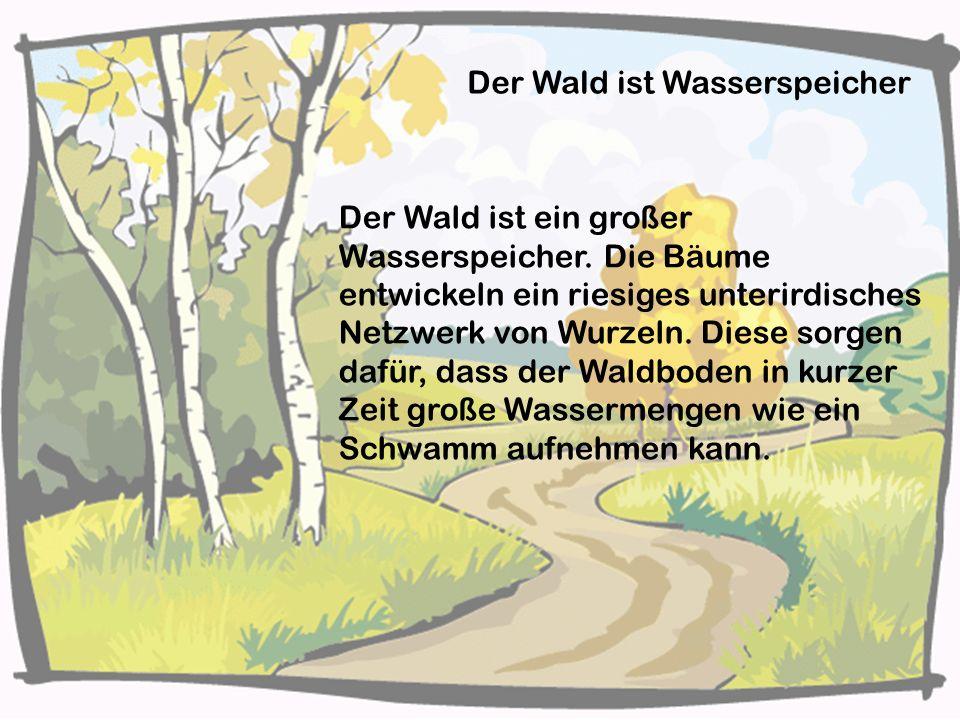 Der Wald ist Wasserspeicher Der Wald ist ein großer Wasserspeicher. Die Bäume entwickeln ein riesiges unterirdisches Netzwerk von Wurzeln. Diese sorge