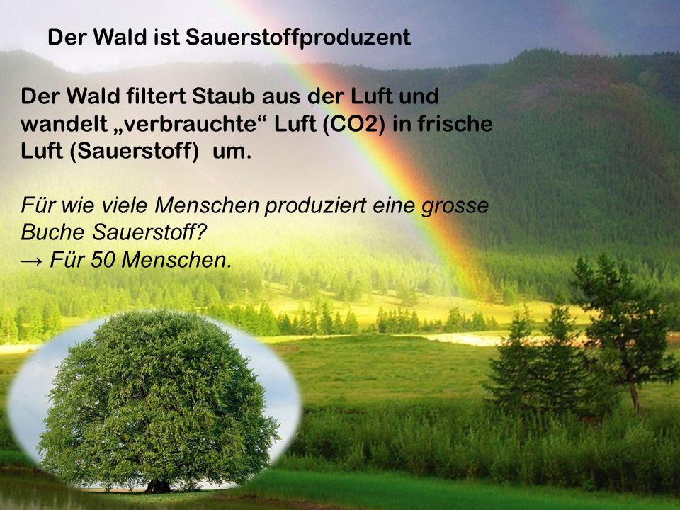 """Der Wald ist Sauerstoffproduzent Der Wald filtert Staub aus der Luft und wandelt """"verbrauchte"""" Luft (CO2) in frische Luft (Sauerstoff) um. Für wie vie"""