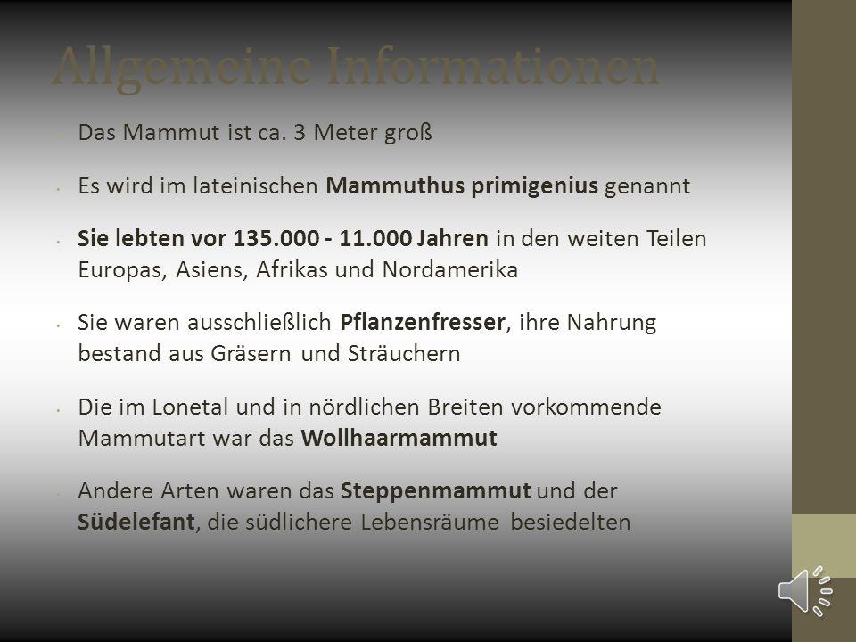 Allgemeine Informationen Das Mammut ist ca.