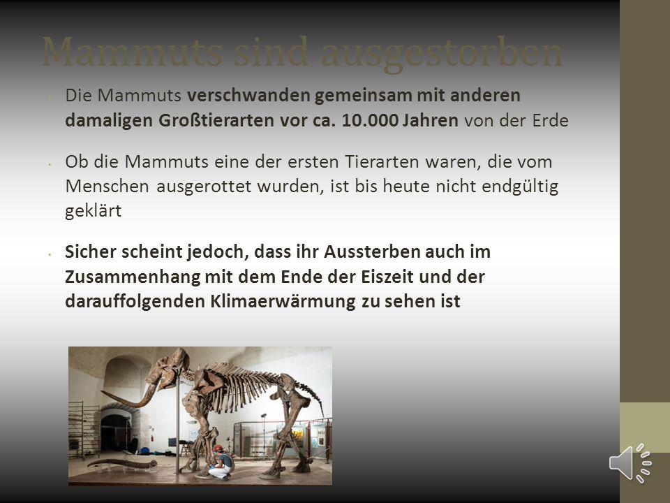 Mammuts sind ausgestorben Die Mammuts verschwanden gemeinsam mit anderen damaligen Großtierarten vor ca. 10.000 Jahren von der Erde Ob die Mammuts ein