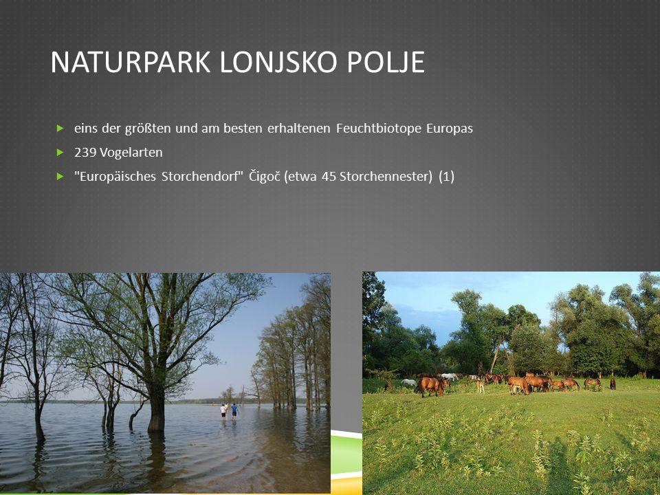 NATURPARK LONJSKO POLJE  eins der größten und am besten erhaltenen Feuchtbiotope Europas  239 Vogelarten  Europäisches Storchendorf Čigoč (etwa 45 Storchennester) (1)