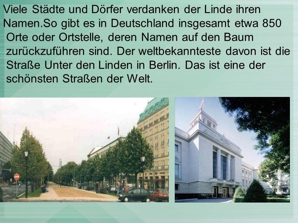 Viele Städte und Dörfer verdanken der Linde ihren Namen.So gibt es in Deutschland insgesamt etwa 850 Orte oder Ortstelle, deren Namen auf den Baum zurückzuführen sind.