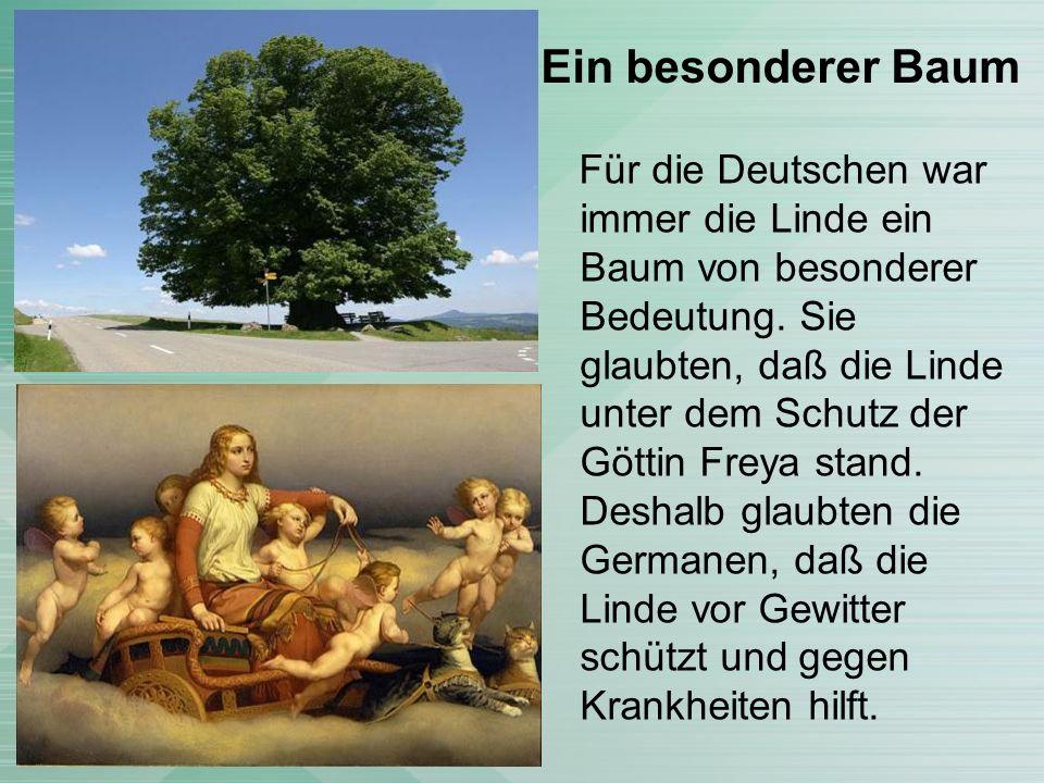 Ein besonderer Baum Für die Deutschen war immer die Linde ein Baum von besonderer Bedeutung.