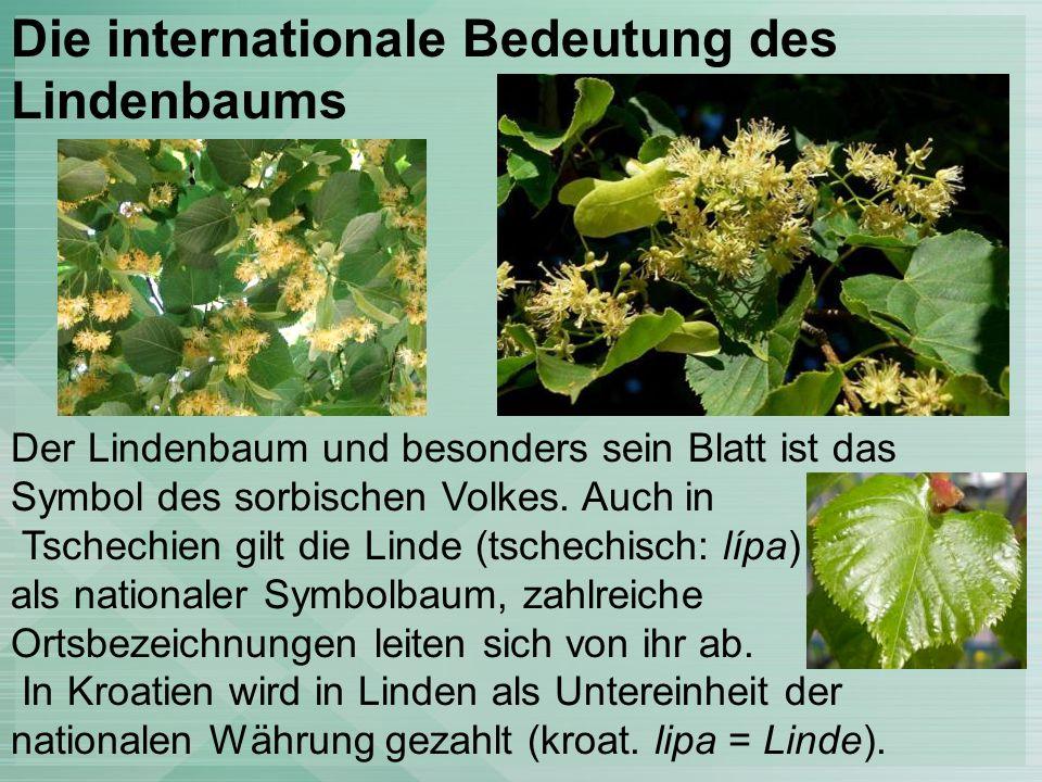 Der Lindenbaum und besonders sein Blatt ist das Symbol des sorbischen Volkes.