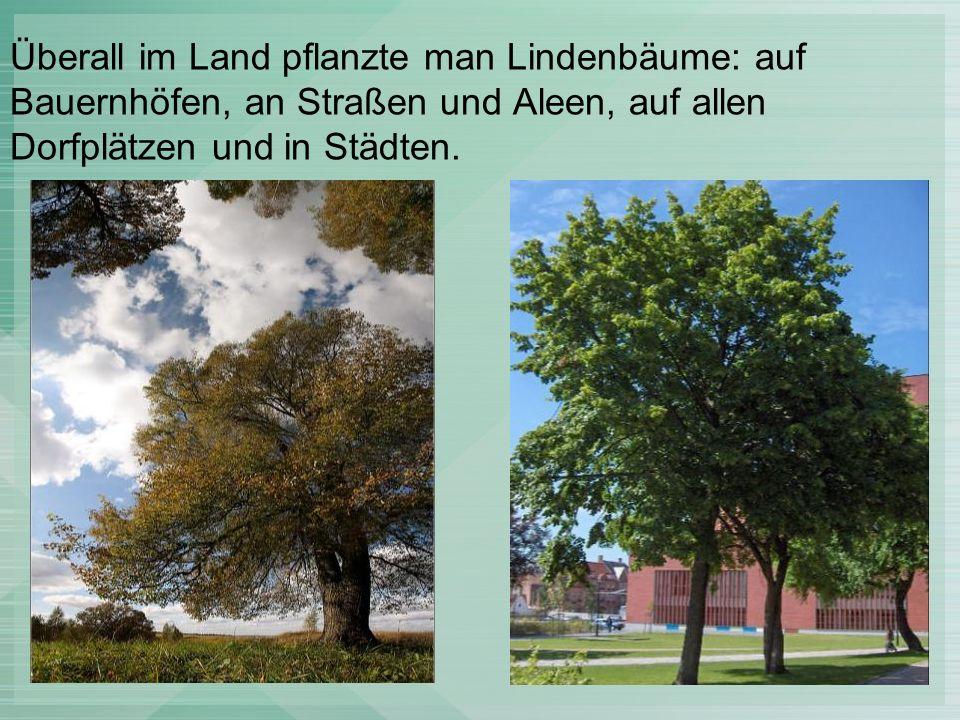 Es gibt heute noch Orte in Deutschland, wo Linden stehen, die 1000 Jahre alt sind.