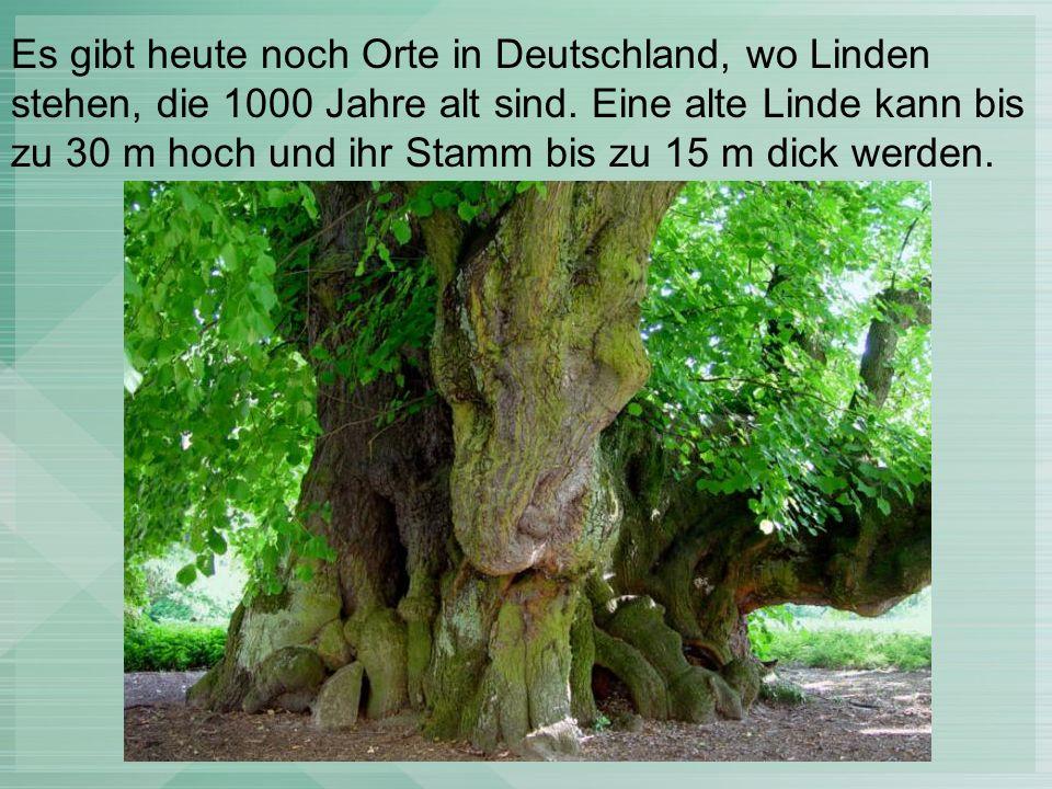 """Unterwaldhausen Ein Lindenzweig ist auf dem Wappen von Unterwaldhausen dargestellt: """"In Gold (Gelb) aus grünem Dreiberg wachsend ein in der Form einer Abtsstab-Krümme nach heraldisch links gebogener grüner Lindenzweig, aus dem fünf grüne Lindenblätter sprießen ."""