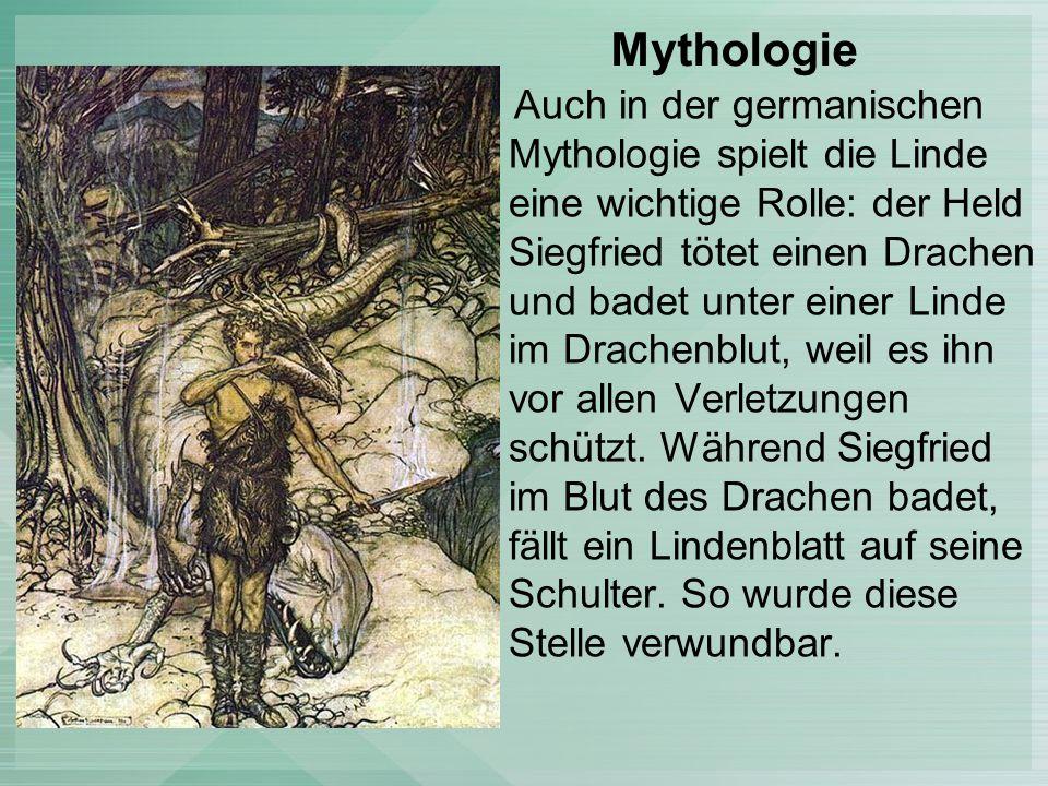 Mythologie Auch in der germanischen Mythologie spielt die Linde eine wichtige Rolle: der Held Siegfried tötet einen Drachen und badet unter einer Linde im Drachenblut, weil es ihn vor allen Verletzungen schützt.