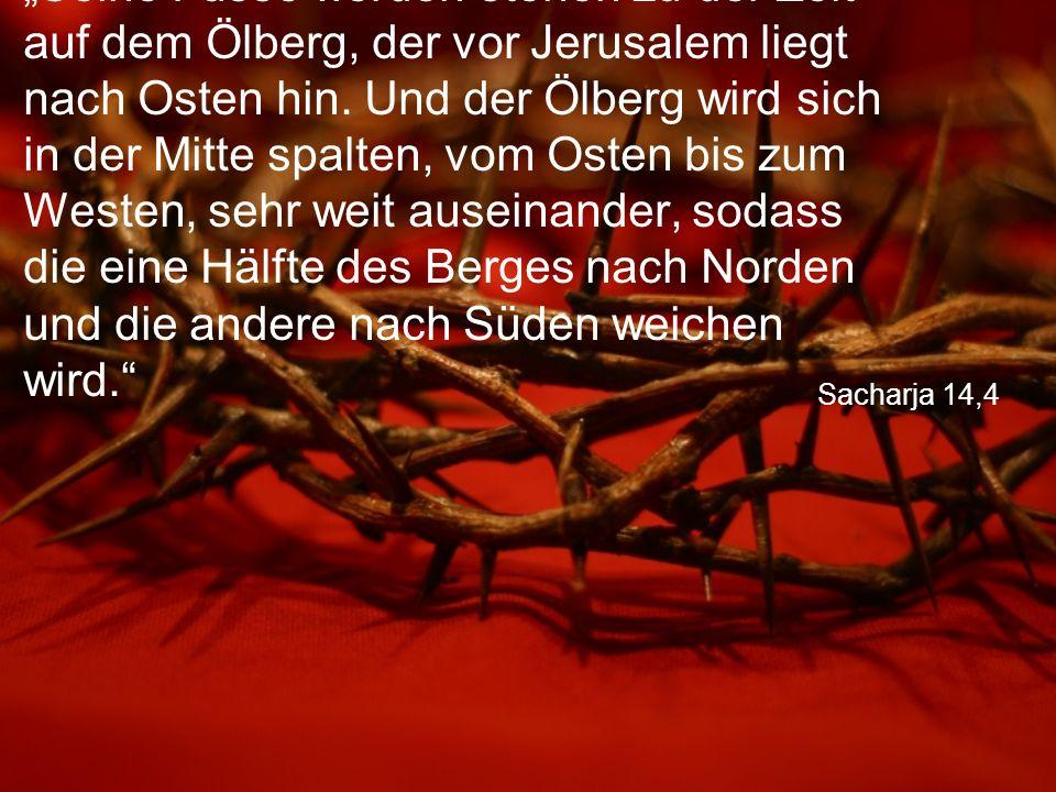 """Sacharja 14,4 """"Seine Füsse werden stehen zu der Zeit auf dem Ölberg, der vor Jerusalem liegt nach Osten hin. Und der Ölberg wird sich in der Mitte spa"""