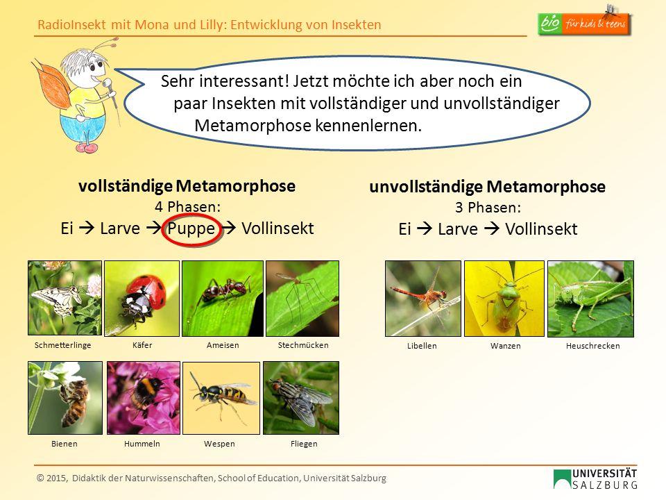 RadioInsekt mit Mona und Lilly: Entwicklung von Insekten © 2015, Didaktik der Naturwissenschaften, School of Education, Universität Salzburg Sehr inte