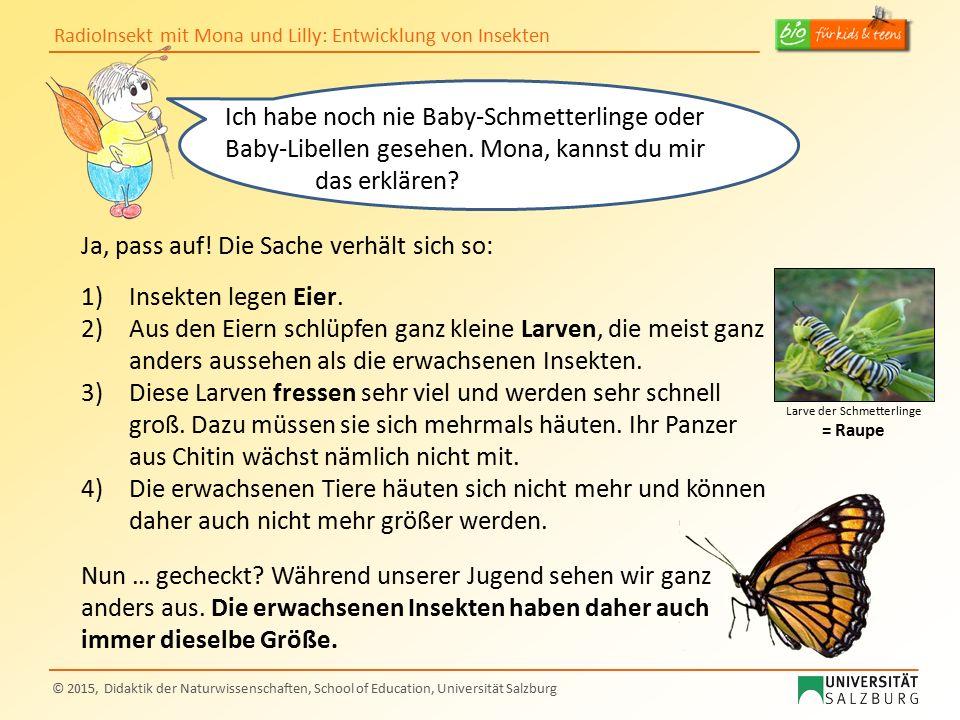 RadioInsekt mit Mona und Lilly: Entwicklung von Insekten © 2015, Didaktik der Naturwissenschaften, School of Education, Universität Salzburg Ich habe