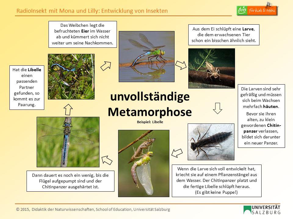 RadioInsekt mit Mona und Lilly: Entwicklung von Insekten © 2015, Didaktik der Naturwissenschaften, School of Education, Universität Salzburg unvollstä