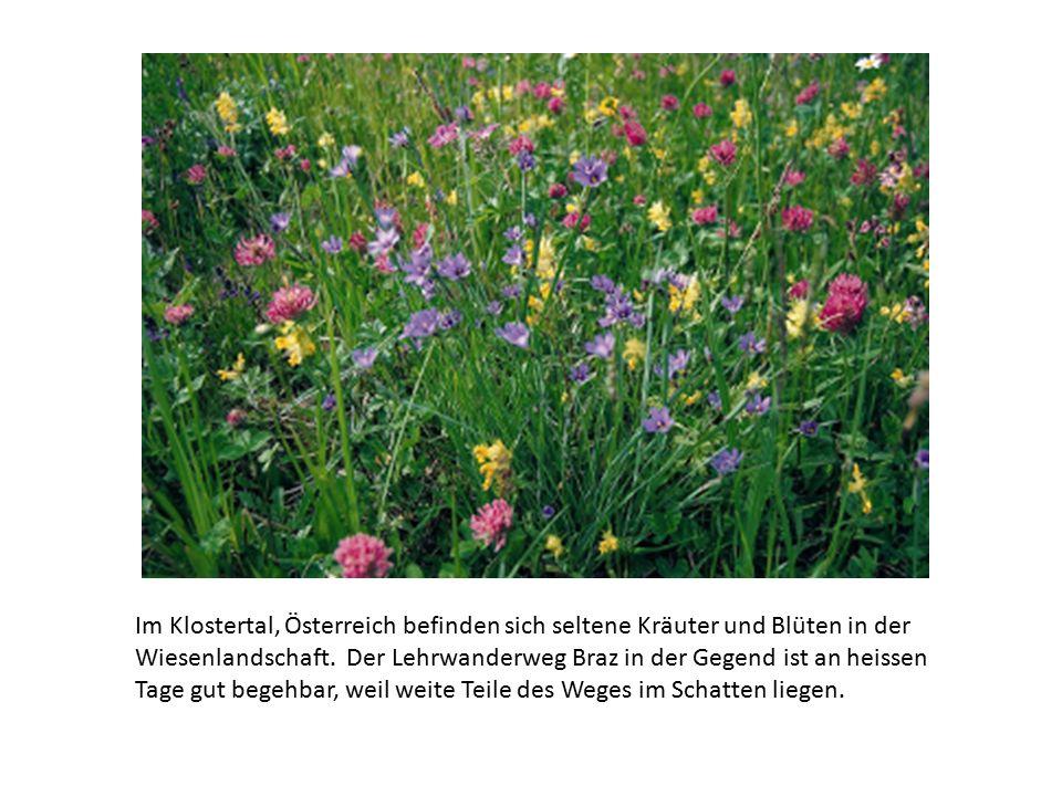 Im Klostertal, Österreich befinden sich seltene Kräuter und Blüten in der Wiesenlandschaft.