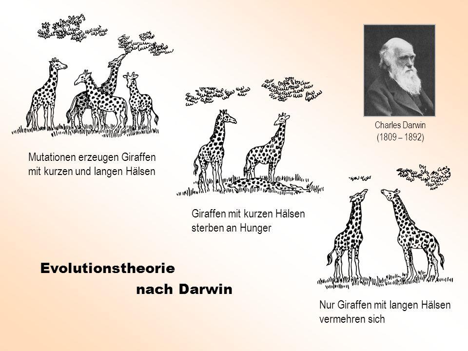 Evolutionstheorie nach Darwin Mutationen erzeugen Giraffen mit kurzen und langen Hälsen Giraffen mit kurzen Hälsen sterben an Hunger Nur Giraffen mit langen Hälsen vermehren sich Charles Darwin (1809 – 1892)