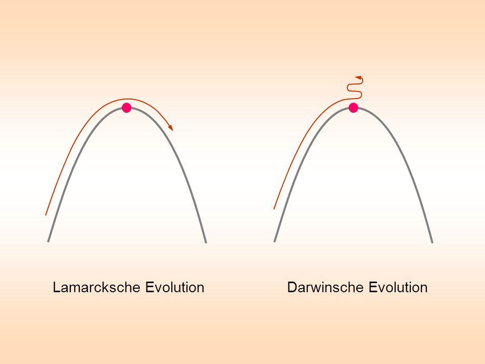 Lamarcksche Evolution Darwinsche Evolution