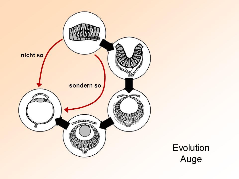 Evolution Auge nicht so sondern so